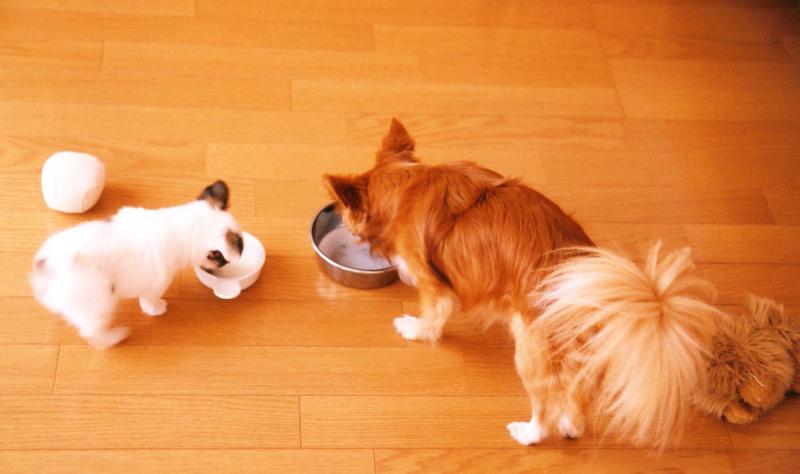 牛乳と愛犬