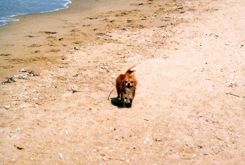 愛犬たくと、海を走る