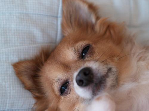 愛犬たくと、いいお顔