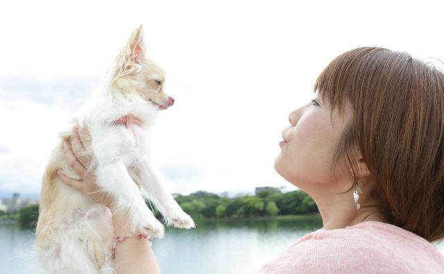 Profile 染矢敦子について