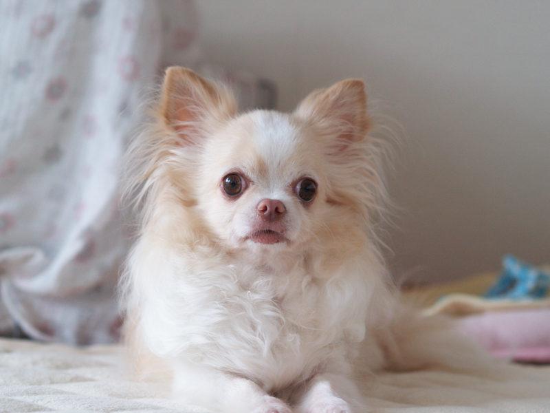 カメラ目線の愛犬