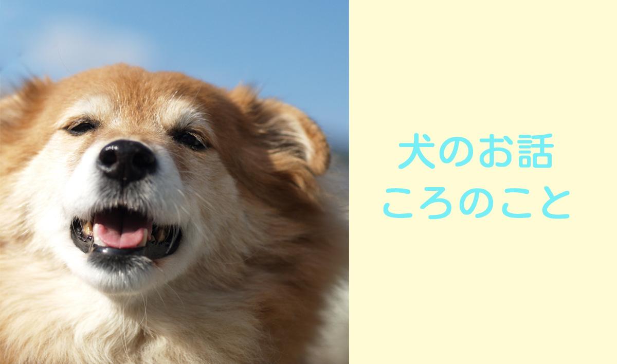 犬のお話 - ころのこと