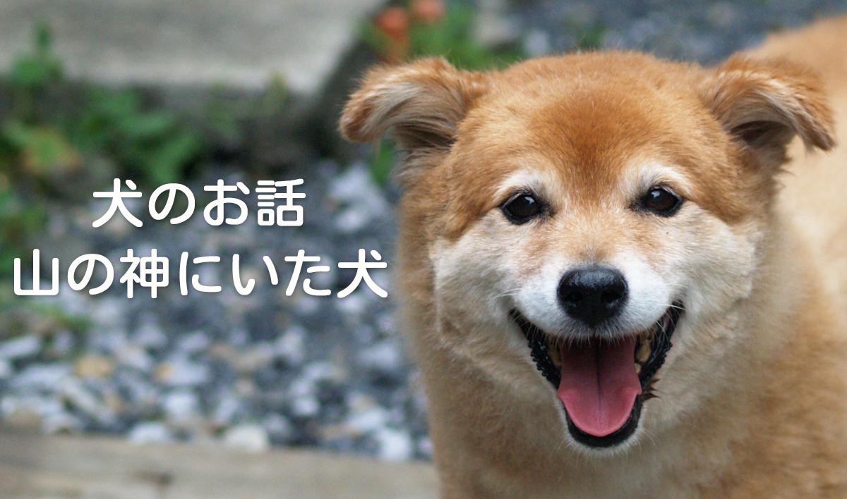 犬のお話 - 山の神にいた犬