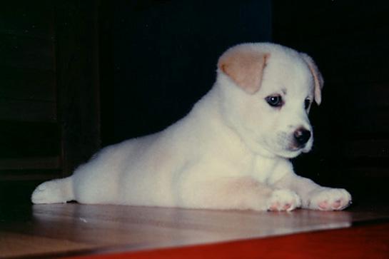 子犬チャム