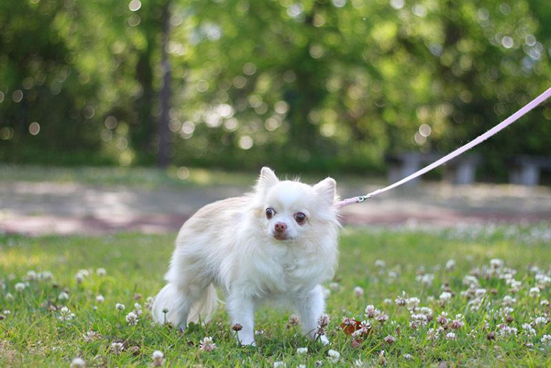 愛犬と公園